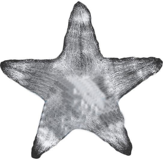 NEON-NIGHT Звезда 513-455 SotMarket.ru 4090.000