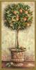 фото Schipper Апельсиновое дерево 9220398