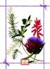 фото Полотенце Tessitura Fragrance Aloe NC110047-20067