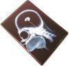 фото Обложка для паспорта Эврика N34 Симпсон мозг