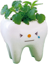 Набор для выращивания мелиссы Tooth Green Seishin NO.GD-49402 SotMarket.ru 900.000