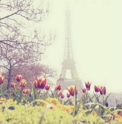 Фото картина Феникс Весна в Париже 36004