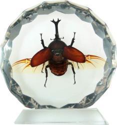 фото Настольный сувенир Русские подарки Гигантский жук-единорог 182003